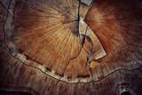 Fototapety wood cut texture ring