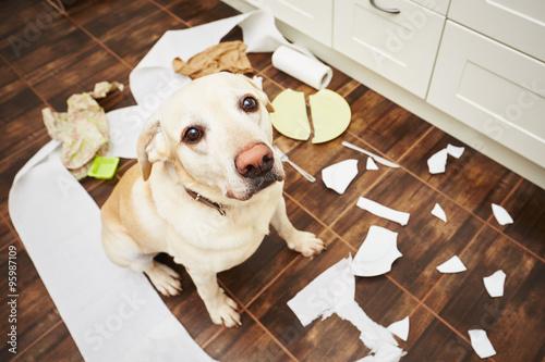 Naughty dog Poster