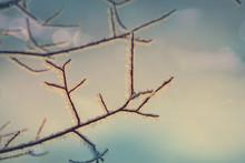 Mrożone drzewa