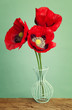 Red vibrant poppy flowers in a blue vase