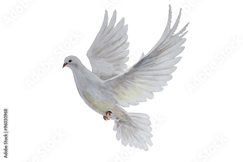 A free flying white dove - 96030968