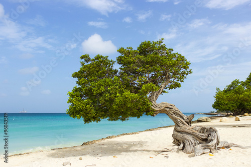 Poster Divi Divi Tree on the Caribbean Island of Aruba