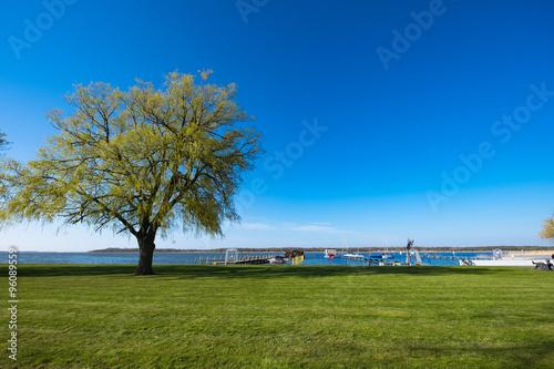 Poster Baum am Bodden