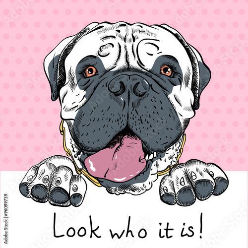 vector funny cartoon hipster dog Bullmastiff  - 96099739
