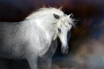 Grey horse with long mane