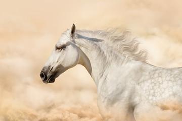 Portret szarego konia