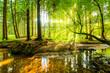 Wald Panorama mit Bach und Sonnenstrahlen