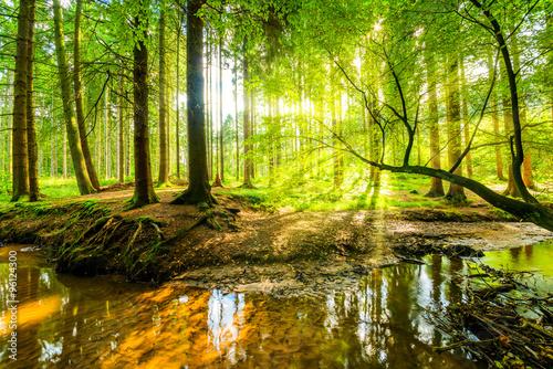 Leśna panorama z potokiem i promieniami słońca