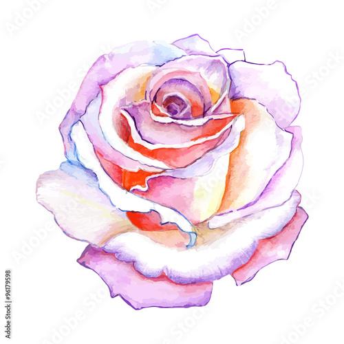 piekna-roza-akwarela-recznie-malowane-na-bialym-tle