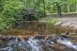 Leafy woodland pathway
