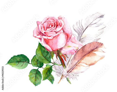 Pink rose and feathers. Watercolor  - 96329553