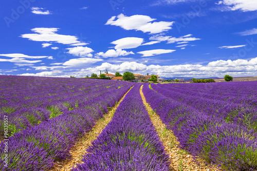 violet feelds of blooming lavander in Provance, France © Freesurf