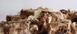 Постер, плакат: Необычное вещество похоже на старую кость Пористые куски с высокой детализацией Заготовка для создания поверхностей земли планеты Кости животного или человека