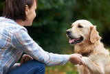 Pet Golden Retriever And Owner Playing Outside Together - 96365900