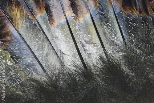 Native American Indian Feathers