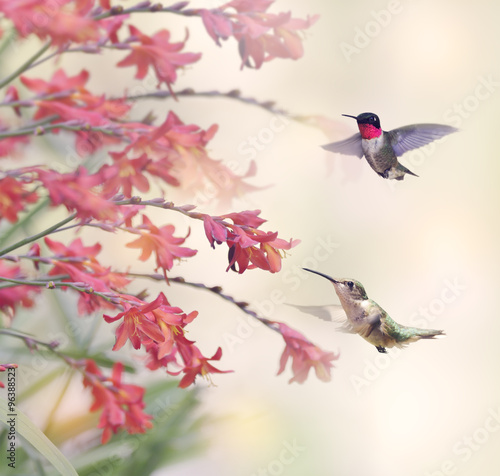Hummingbirds and Red Flowers - 96388523