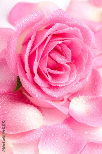 zakonczenie-rozowi-rozanych-petails-up-zakrywajaca-rosa