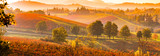 Castelvetro di Modena, vineyards in Autumn, italy  - 96438761