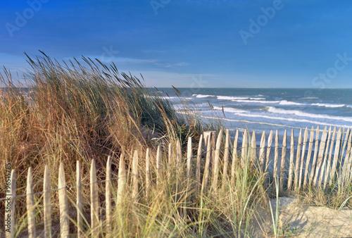 Poster matinsur la côte