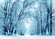 Detaily fotografie Winter scenery, frosty trees in park