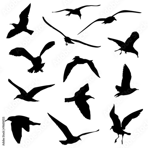 various birds flying silhouettes