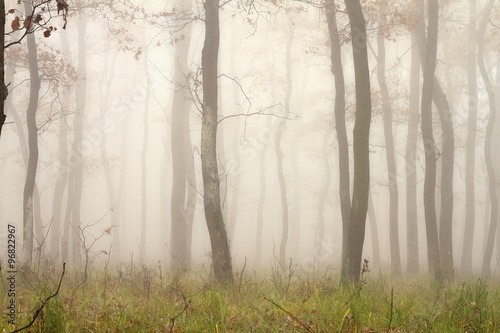 mist through the trees © taviphoto