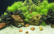 Постер, плакат: Аквариум с рыбками