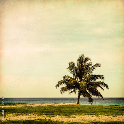 Coconut tree on the beach - 96934749