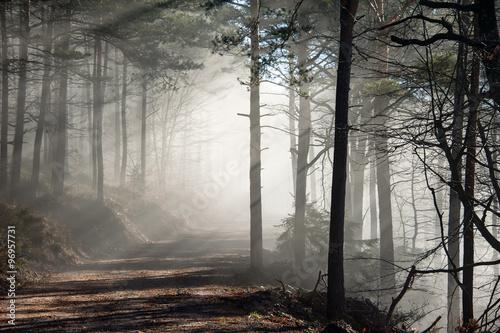 Lichtdurchfluteter Nebelwald im Spätherbst - 96957731