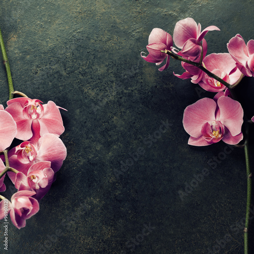 Pink orchid on a dark background - 96960323