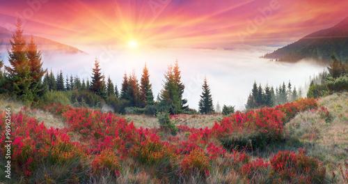 Golden colors of autumn - 96962566
