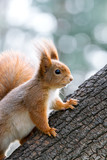 young little squirrel on tree trunk