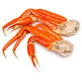 Snow crab (Chionoecetes opilio) or Tanner crab