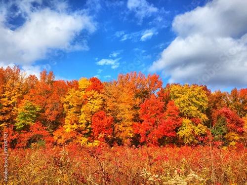 foliage fall day