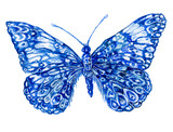 бабочка акварель, графика,насекомое ,рисунок ,