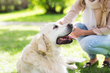 close up of woman with labrador dog on walk - Fine Art prints