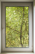 pvc window, which you can see green of a tree park in the ecologically clean area of the city with fresh air - 97125907
