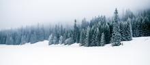 Bosque blanco del invierno con nieve, fondo de Navidad