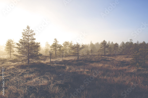 A mystical pine forest on a cold morning. Image taken on a big swamp during early November in Finland. The fog and frost is covering up the whole forest. Image has a vintage effect applied. - 97177157