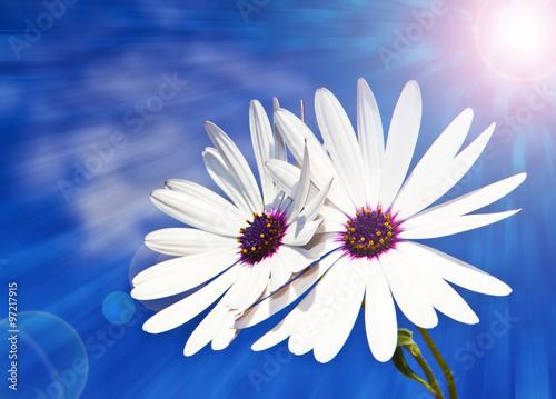 Zdjęcia na płótnie, fototapety, obrazy : flores blancas bajo el sol