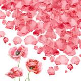Watercolor petals of a poppy