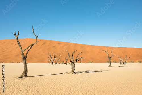 Poster Tunesië Dry trees in desert crater area at Deadvlei in Sossusvlei territory - Namibian world famous desert - African nature wonder with unique wild landscape in Namibia near South Africa