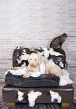 Hund und Katze auf zerstörter Couch - 97392590