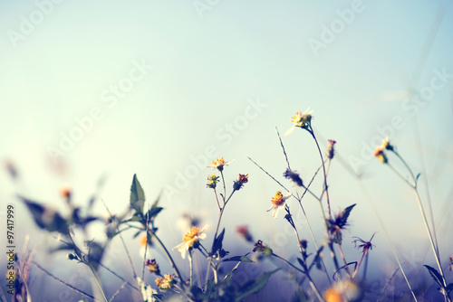 Fototapeta Vintage photo of nature background with wild flowers and plants