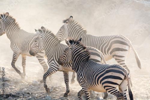 zebry-biegajace,-namibia,-afryka