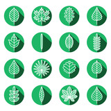 Leaves types green icons vector set. Modern flat design.