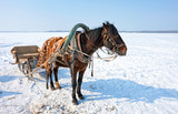 Horse with sledge at the bank of frozen river in wintertime