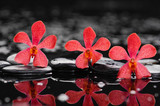 Set of three red orchid on wet background