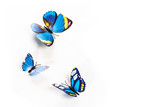 blue butterfly on a white background