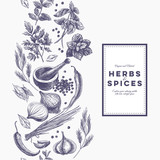 Vector background with hand drawn herbs and spices.  - 97568900